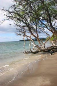 Beach and tree
