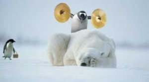 Penguin with cymbals on polar bear