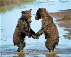 Bears Dancing