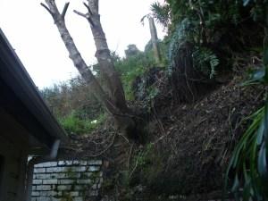 Tree on bank
