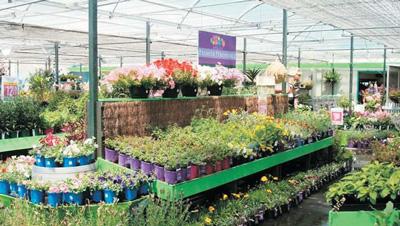 Garden Centre on Garden Centre