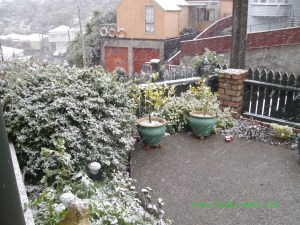 Snowing in Brooklyn, Wellington