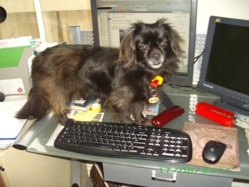 Lotte on desk