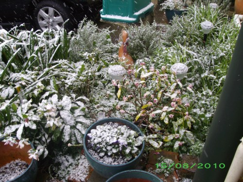 Snow on plants