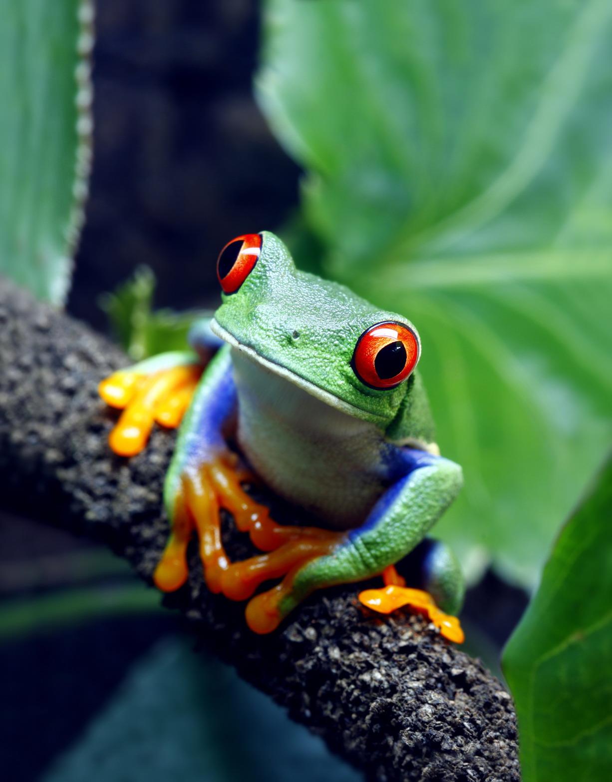 Frog eating bird - photo#22