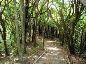 Khandallah Bush Walk