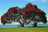 Pohutakawa tree