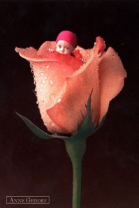 Baby in rose