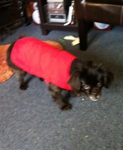 Lotte dressed