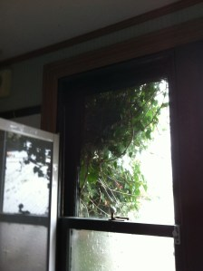 Ivy at bathroom window