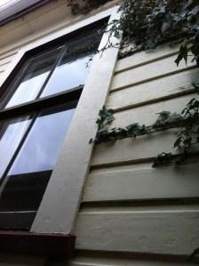 Ivy at study window